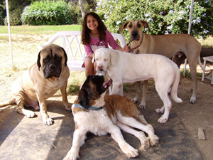 Melody and rescue dogs