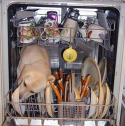 funny photo of dog in dishwasher